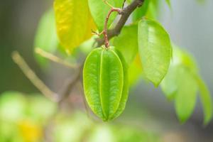 grön stjärna äppelfrukt på träd foto