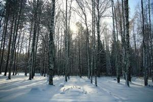 landskap vinter snö skog foto