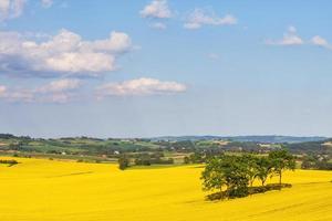 landskap med gult rapsfält