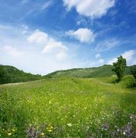 bergslandskap med blommor fält