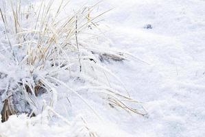 vinterfrost foto