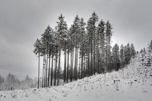 träd på vintern