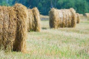 skördat fält med halmbalar på sommaren foto