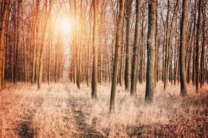 vinter skog