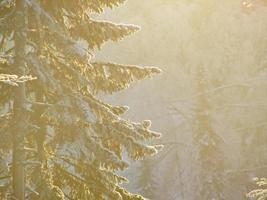 snöig vinterskog foto