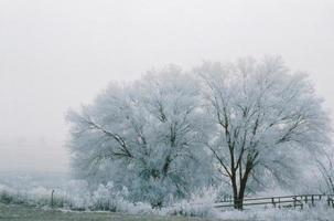 vintern i bitterroten foto