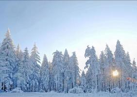 morgonsol, vinter, svart skog foto