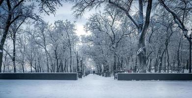 vintern i taganrog, Ryssland foto