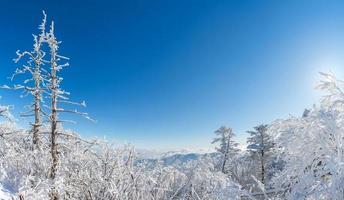 panorama över vintern, korea foto