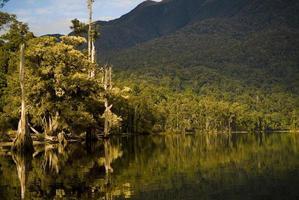 djungel sjön foto