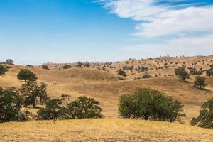 kullar i woody landspanorama foto