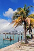 Miami stad tropisk utsikt foto