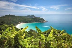bananväxtfält på en kulle på en tropisk ö