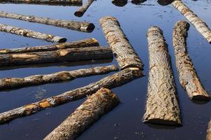 stockar sitter i ett sågverk damm