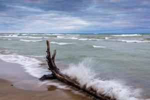 vågor kraschar mot drivved foto