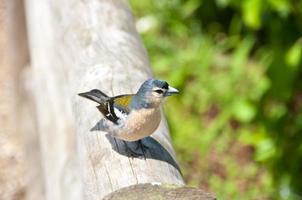fågel i naturparken foto
