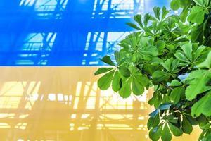 ukrainska flaggan foto