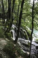 plitvice sjöar, Kroatien foto