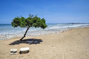 ensamt träd på stranden foto