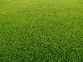 golfgrön foto