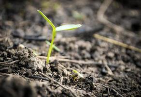 plantplantor foto