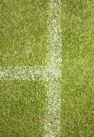 gräsvallen foto
