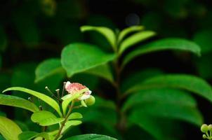 atmosfär i trädgården foto