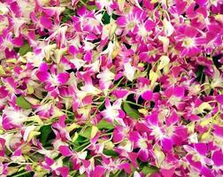 vackra orkidéblommor som blommar foto