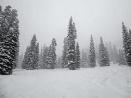 skidbacke och höga tallar i en snöstorm