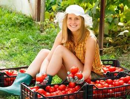 tomatsortering foto