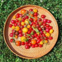 blandade färgglada tomater foto