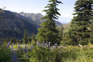 vilda blommor i bergen foto
