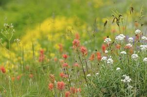färgglada vilda blommor foto
