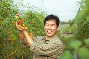 asiatisk jordbrukare som rymmer tomat foto