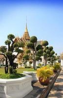 Bonsai träd foto