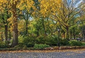 Central Park färger foto