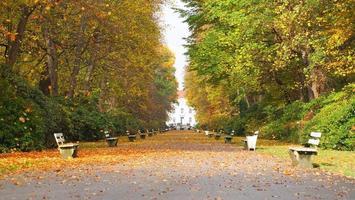 hösten trädgårdar foto
