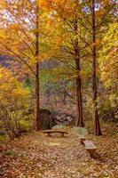 höst skog bänk