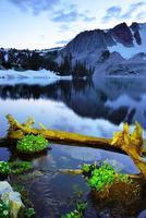 vilda blommor och sjö i snöiga bergsområden foto