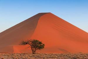 spektakulär röd sanddyn solnedgång sossusvlei foto
