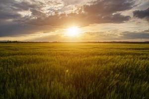 fält solnedgång