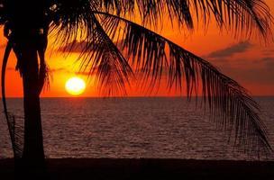 solnedgång och palm foto