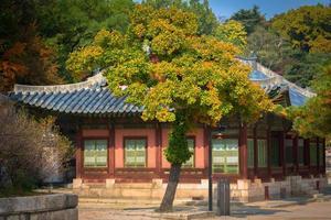 i changgyeonggung palats, Seoul foto