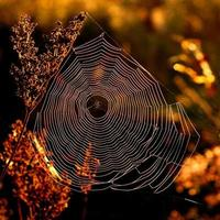 morgonweb på stränder under soluppgång