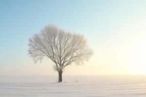 enda frostat träd i snö i gryningen