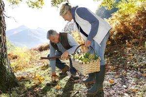 bra plockning svamp i skogen foto