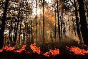 skogsbrand foto