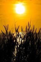 gräs silhuett på gul solnedgång solnedgång färgad rök och gräs foto
