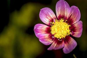 tropisk blomma