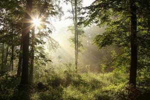 en vacker utsikt över en vårskog i gryningen